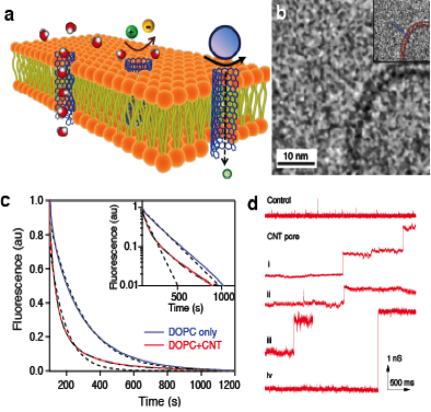 Figure 2. (a) schematic illustrating carbon nanotube (cnt) porins inserted into the lipid membrane. (b) cryogenic transmission electron microscopy image showing a cnt porin in a lipid membrane. (c) proton transport in cnt porins. the addition of the porins to the lipid bilayer causes faster decay of the fluorescence of a liposome-encapsulated ph-sensitive dye after the liposome was exposed to a ph gradient. (d) conductance traces showing spontaneous incorporation of cnt porins into a lipid membrane from sol