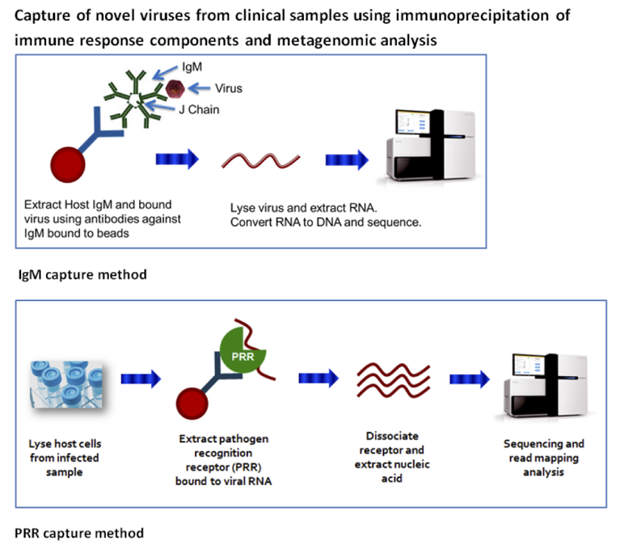 Retrieval of novel infectious agents from clinical samples via igm antibodies and pathogen recognition receptor capture.