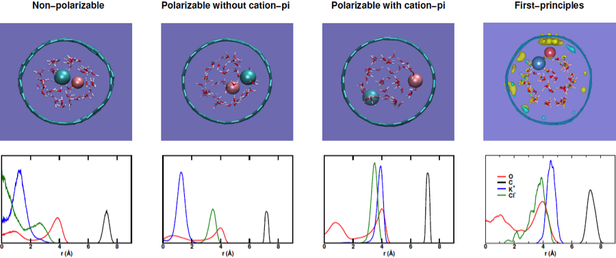 Figure 5. first-principle and classical molecular dynamics predictions of the structure of potassium-chloride solution inside a 14-å single-walled carbon nanotube. from left to right: classical molecular dynamics with non-polarizable, polarizable, polarizable + cation–pi force field, and first-principle molecular dynamics simulations. top row: snapshots of the molecular dynamics trajectories; light blue = chloride; violet = potassium cation; red = oxygen; white= hydrogen. negative and positive polarization