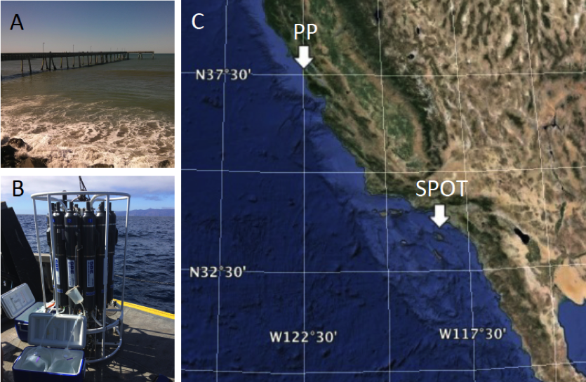 Figure 1. sampling sites for collection of thaumarchaea to better understand the role of these cells in global carbon and nitrogen cycling. (a) pacifica pier (pp), san francisco, california, extends 1.4 km into the pacific ocean. (b) niskin sampling bottles, in a rosetta arrangement, were used to collect water at the san pedro ocean time-series (spot) location, 17 km off the shore of los angeles, california. (c) map of the two sampling locations.