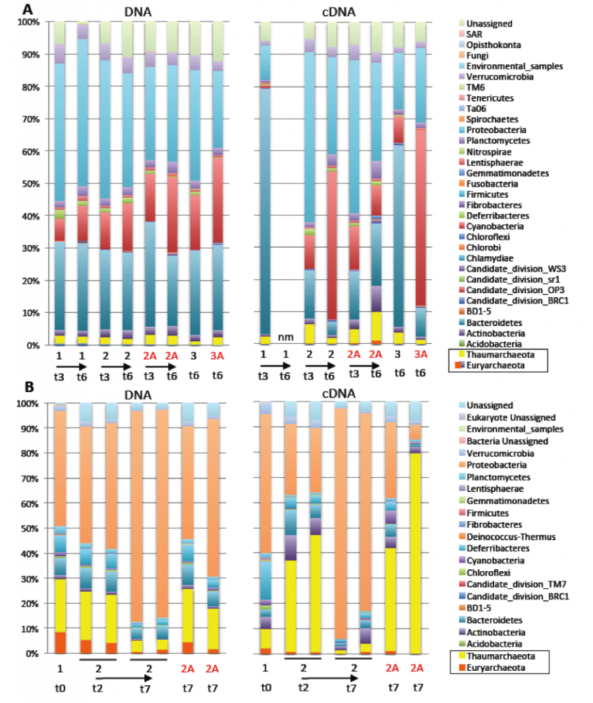 """Figure 2. Changes in microbial community compositions (DNA) and activity (cDNA) at the phylum level during incubation with isotopically labeled substrates with and without antibiotics. (A) Experiment 1, Pacifica Pier, San Francisco, California. (B) San Pedro Basin, Los Angeles, California. Time incubated is shown in """"t"""" days. Numbers indicate treatment conditions: 1 = no amendments, 2 = carbon-13 bicarbonate and nitrogen-15 amino acids, 3 = carbon-13 and nitrogen-15 amino acids. A = antibiotics and nm = not"""