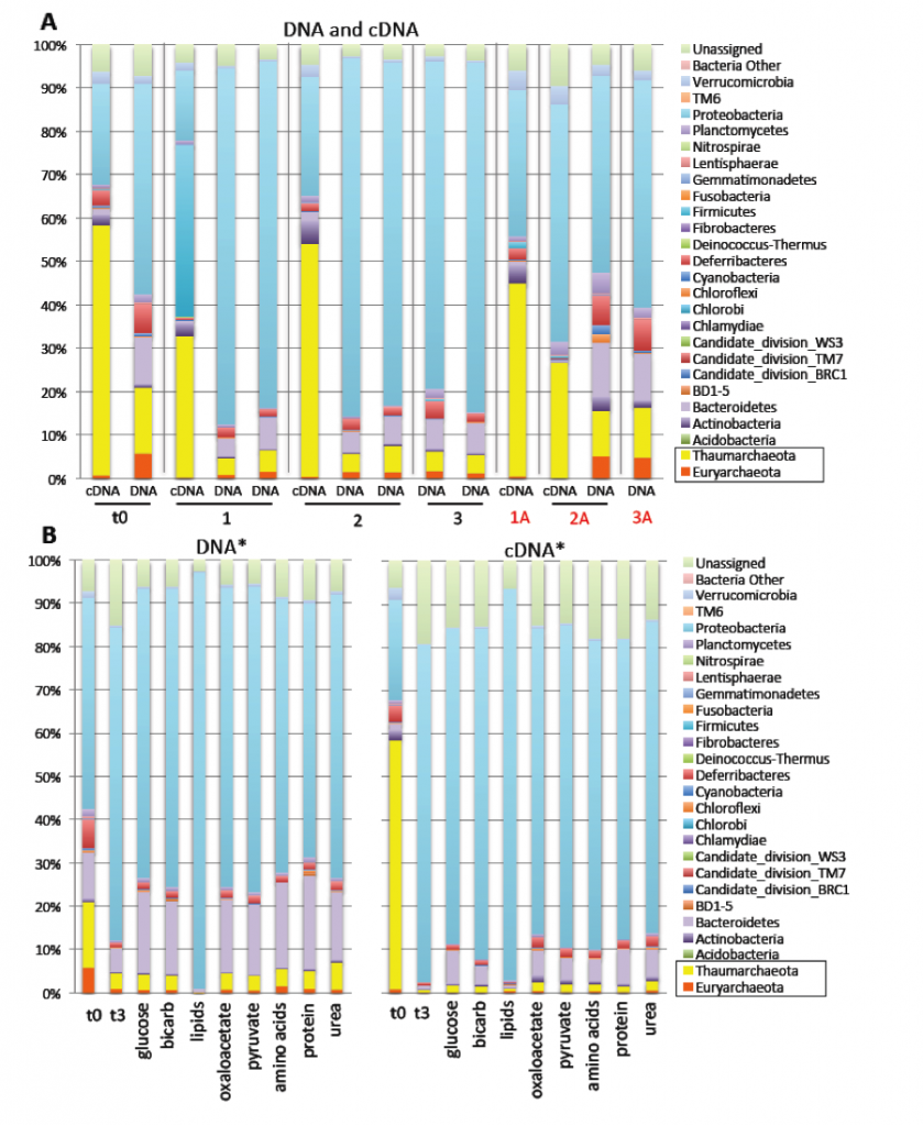 """Figure 3. Changes in microbial community compositions (DNA) and activity (cDNA) at the phylum level during incubation with isotopically labelled substrates with and without antibiotics. All bottles were incubated for 7 days. Time incubated is shown in """"t"""" days. With the exception of t0, each bar represents the average of 5 biological replicates. (A) Experiment 3, San Pedro Basin, Los Angeles, California. (B) Experiment 4, San Pedro Basin, Los Angeles, California. All bottles were amended with ammonium ion l"""