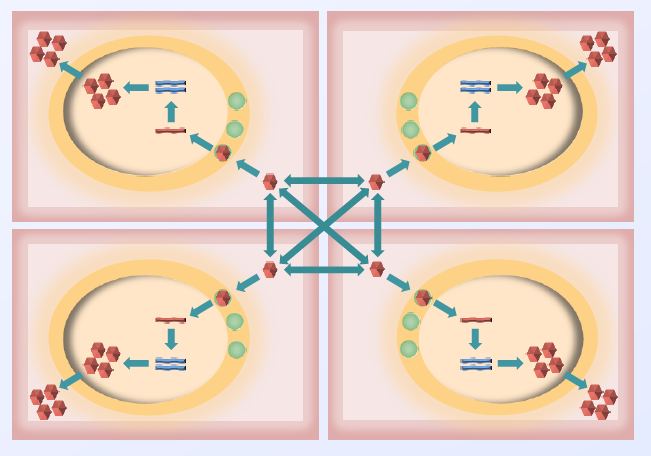 Schematic diagram of our viral evolution model, illustrating the main steps required to simulate the evolution of viral genomic sequences as they are replicated in cells. this model is designed to execute in parallel on many compute processes, and each rectangle shows the components represented in a single compute process. individual virions (viral copies) exist in the intercellular medium, and their reproduction and mutation is modeled in three steps: virions attach to a cell well, enter the cell, and form