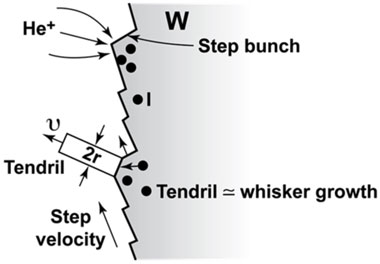 Figure 3. mechanisms proposed for the initiation and growth of tungsten (w) tendrils on tungsten in fusion tokamaks.