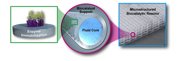 A biocatalytic reactor is fabricated by printing enzymes embedded in a polymer. The reactor consists of a lattice of tubes for continuous product removal and has a high gas/biocatalytic contact area to improve mass transfer and throughput.