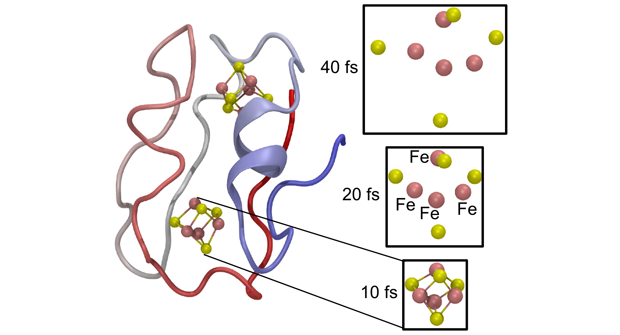 Simulation of the response of a ferredoxin protein (left) to intense x-ray free-electron laser radiation. the displacement dynamics of the high atomic-charge number [4fe–4s] cluster is shown on the right. the iron and sulfur atoms are colored red and green, respectively.