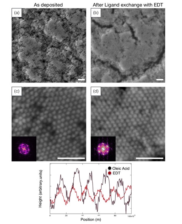 Figure 2. domain growth and retention of medium-range order during ligand exchange. films of 14.4-nm nickel nanocrystals with (a,c) oleic acid and (b,d) ethanedithiol (edt) ligands. the line scan shows qualitatively that the oleic-acid-coated nanocrystals (black) are further apart than the edt-coated nanocrystals (red).
