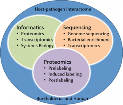 Deciphering the burkholderia–human interactome, a marriage of multiple disciplines.