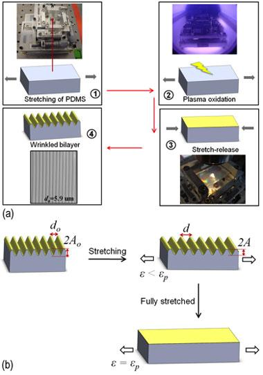 Figure 1. (a) process steps for fabricating thin film wrinkles using polydimethylsiloxane (pdms). (b) effect of stretch on pitch and depth of wrinkled patterns.