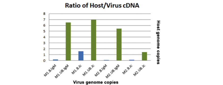 Figure 5. shown is the ratio of host to viral rna, as measured by qpcr-based comparison of detected mammalian 18s rrna to detected sendai virus rna. lung lavage from two mice infected with sendai virus (m1 and m2) was subjected to immunoprecipitation using antibodies to mouse igm and j chain. sample rna was extracted and converted to cdna. values shown are not intended to reflect a direct comparison of absolute quantity, as copy number will vary widely between the two targets. instead, these ratios demonstr