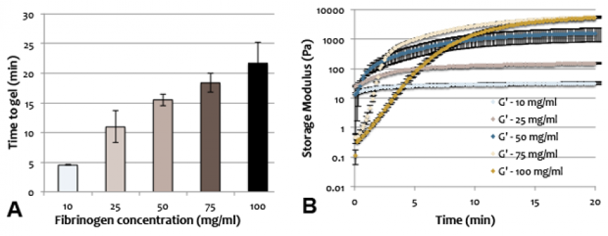 Figure 2. gelation mechanics were tuned for optimal printability and viability using rheology. rheology studies identified gelation time of fibrin based bioinks (a) and indicated resulting gel stiffness (b).