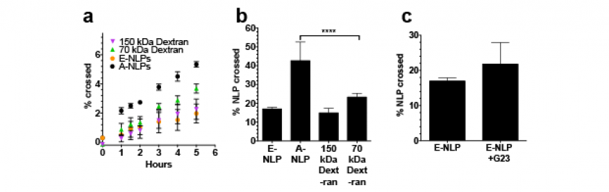 Figure 3. data comparing transport rate of nanolipoproteins (a-nlps and e-nlps) and dextran controls expressed as percent of total mass (a). at 24 h, a-nlps had the fastest rate of transport (b). nanolipoprotein particles (e-nlps) conjugated with the g23 peptide were compared to those without (c).