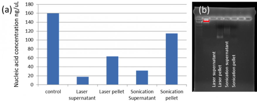 Figure 3. (a) comparison of dna extraction efficiency between control, and laser and ultrasonication lysis.