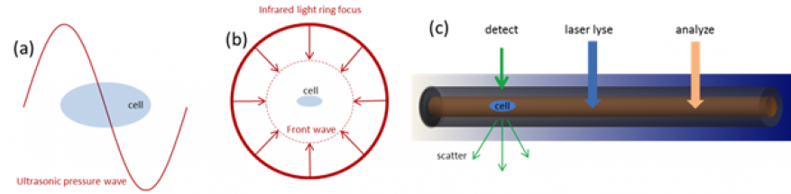 Figure 5. future research areas. (a) high-frequency modulation of laser pulse generates high amplitude ultrasonic waves with wavelength comparable to cell size to maximize pressure gradient across a cell. (b) increasing the amplitude of pressure waves based on ring focus illumination. pressure front propagates towards the center of the ring, increasing the amplitude at cell location. (c) integration with flow cytometry instrumentation. position of the cell is detected from scattered light, triggering pulses